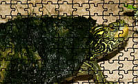 Map Turtle Jigsaw Puzzle