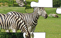 Zebra Couple Jigsaw